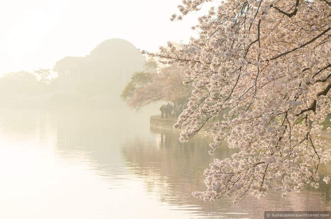 Jefferson Memorial in the Haze with Cherry Blossoms in Washington DC-COPYRIGHT HAVECAMERAWILLTRAVEL