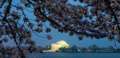 "wpid3644 Jefferson Memorial and Cherry Blossoms Pre Dawn 01 COPYRIGHT 513x250 - <i class=""fa fa-camera""></i> Shooting in the Dark"