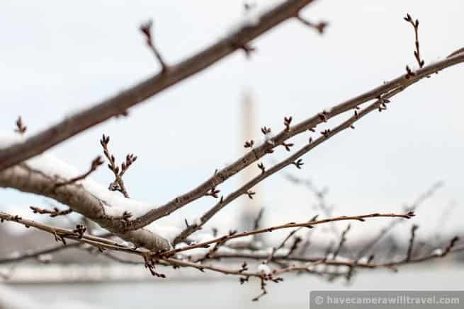 Cherry Blossom Watch Update: February 26, 2014