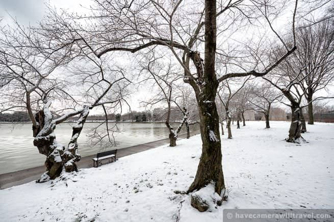 wpid3960-Snow-on-the-Cherry-Trees-in-Washington-DC-06-COPYRIGHT.jpg
