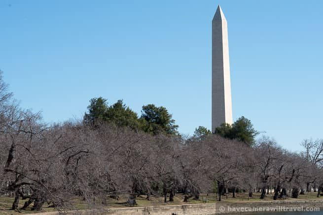 Cherry Blossom Watch Update: March 13, 2014
