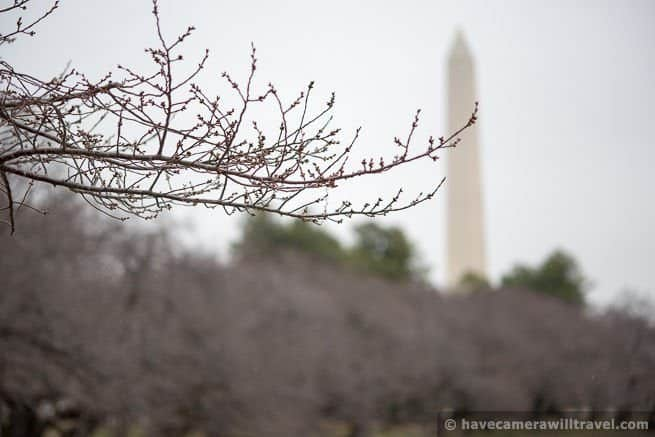 Cherry Blossom Watch Update: March 19, 2014