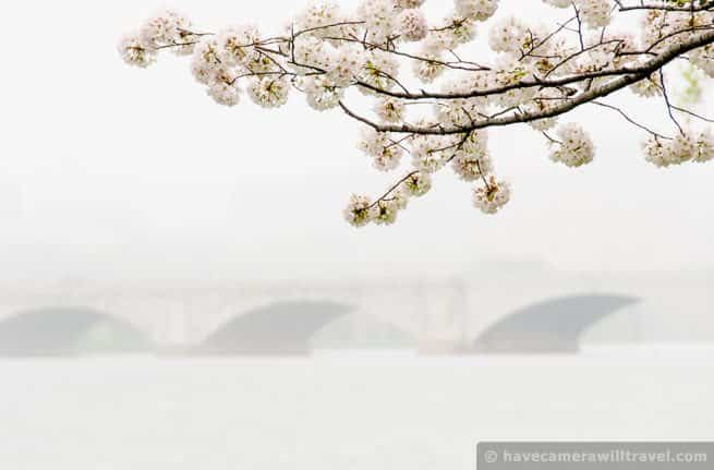 This shot, with Memorial Bridge in the background on a misty spring morning, includes a branch of one of the thousands of cherry trees lining the waterfront of Hains Point.