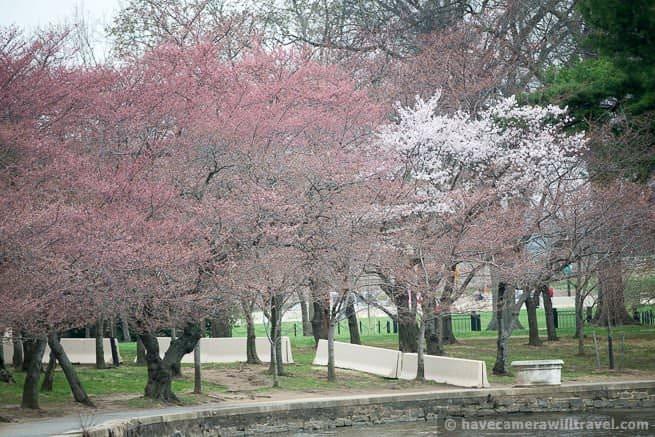 wpid4405-Washington-DC-Cherry-Blossoms-April-4-2014-01-COPYRIGHT.jpg
