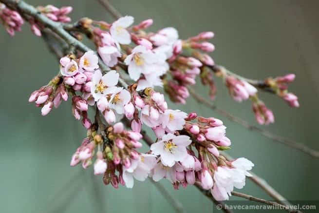wpid4407-Washington-DC-Cherry-Blossoms-April-4-2014-02-COPYRIGHT.jpg