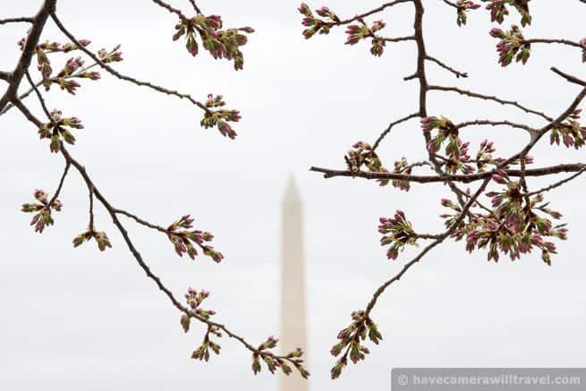 wpid4431-Washington-DC-Cherry-Blossoms-April-4-2014-14-COPYRIGHT.jpg