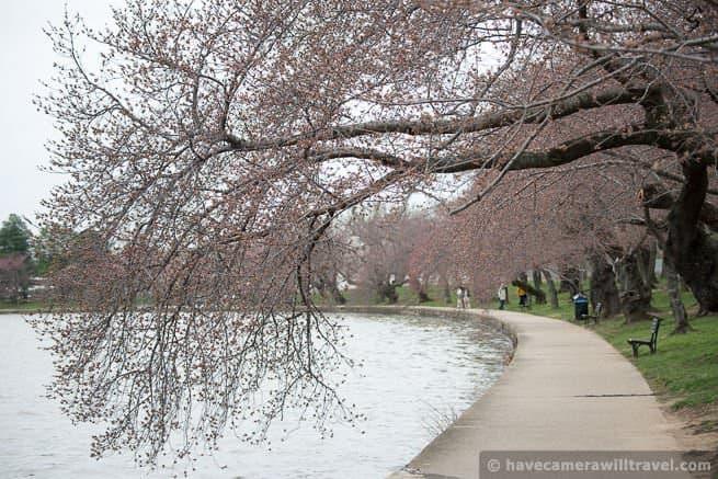 wpid4445-Washington-DC-Cherry-Blossoms-April-4-2014-21-COPYRIGHT.jpg