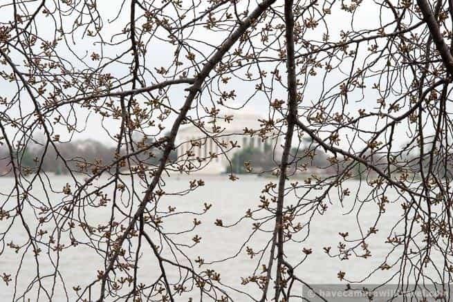 wpid4449-Washington-DC-Cherry-Blossoms-April-4-2014-23-COPYRIGHT.jpg