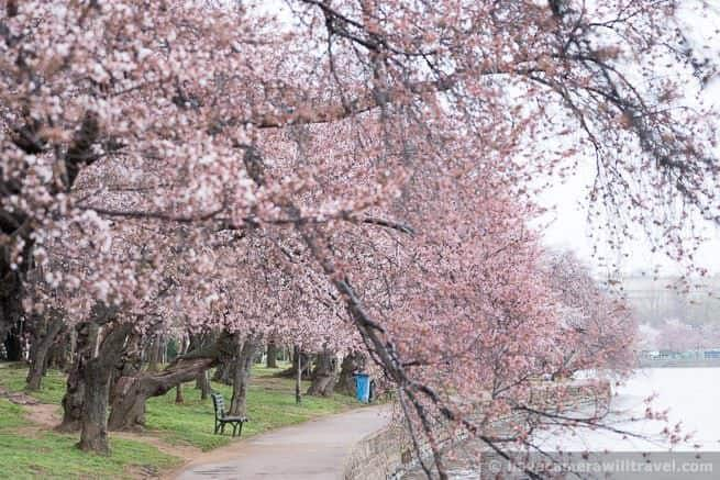 wpid4525-Washington-DC-Cherry-Blossoms-April-7-2014-05-COPYRIGHT.jpg