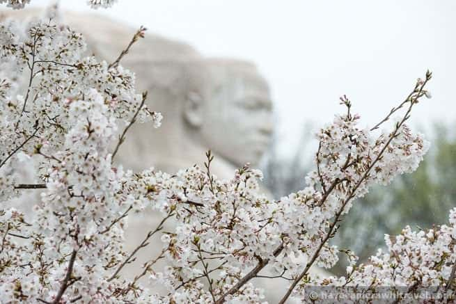 wpid4539-Washington-DC-Cherry-Blossoms-April-7-2014-12-COPYRIGHT.jpg