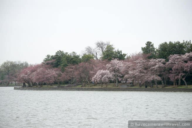 wpid4543-Washington-DC-Cherry-Blossoms-April-7-2014-14-COPYRIGHT.jpg