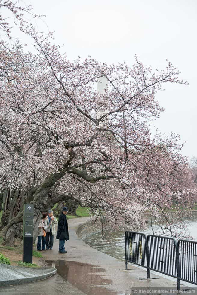 wpid4545-Washington-DC-Cherry-Blossoms-April-7-2014-15-COPYRIGHT.jpg