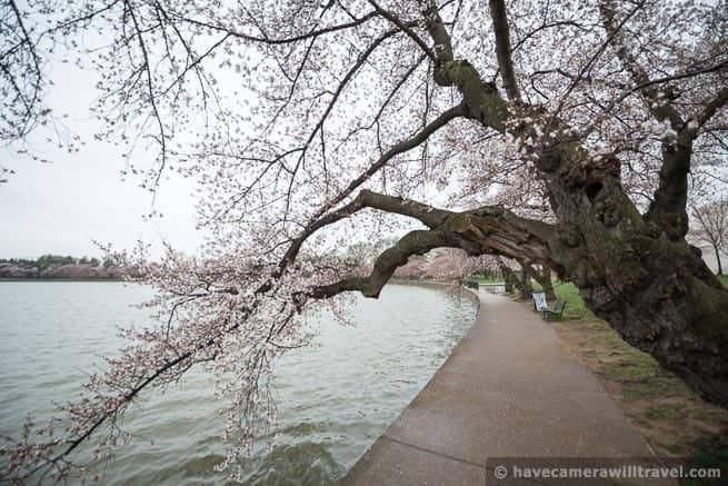 wpid4547-Washington-DC-Cherry-Blossoms-April-7-2014-16-COPYRIGHT.jpg