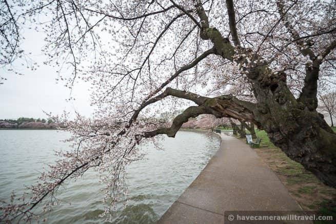 wpid4547-Washington-DC-Cherry-Blossoms-April-7-2014-16-COPYRIGHT.jpg