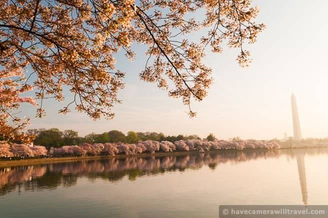 wpid4774-Early-Morning-Cherry-Blossoms-in-Washington-DC-05-COPYRIGHT.jpg