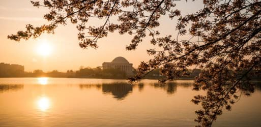 wpid4781-Sunrise-at-the-Tidal-Basin-with-Cherry-Blossoms-01-COPYRIGHT