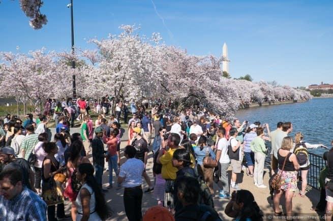wpid4873-Washington-DC-Cherry-Blossoms-April-12-2014-01-COPYRIGHT.jpg