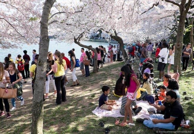 wpid4875-Washington-DC-Cherry-Blossoms-April-12-2014-02-COPYRIGHT.jpg
