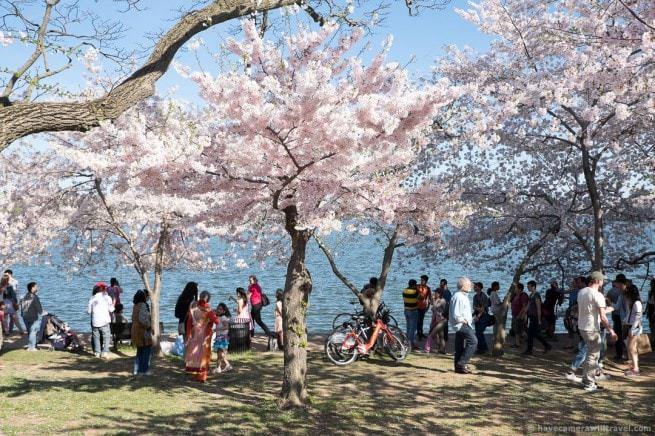 wpid4889-Washington-DC-Cherry-Blossoms-April-12-2014-09-COPYRIGHT.jpg
