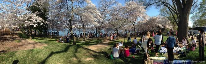wpid4891-Washington-DC-Cherry-Blossoms-April-12-2014-10-COPYRIGHT.jpg