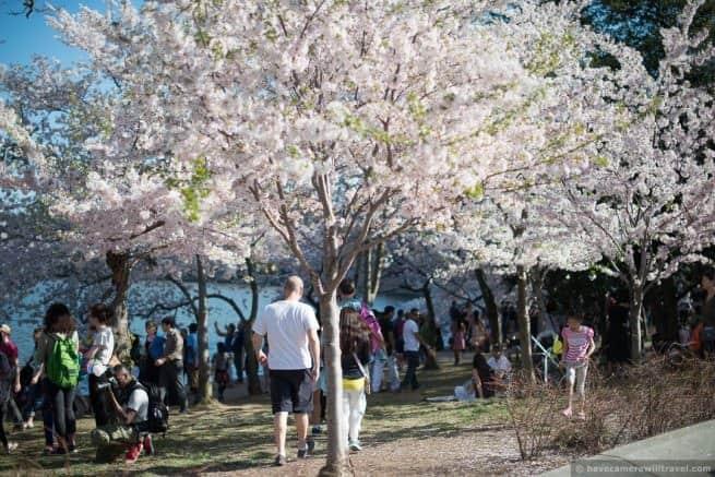 wpid4911-Washington-DC-Cherry-Blossoms-April-12-2014-18-COPYRIGHT.jpg