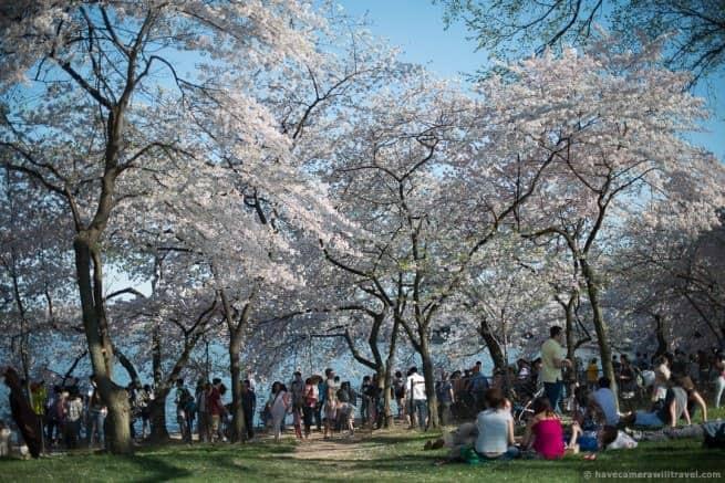 wpid4915-Washington-DC-Cherry-Blossoms-April-12-2014-20-COPYRIGHT.jpg