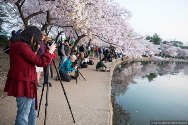 wpid4937-Washington-DC-Cherry-Blossoms-April-13-2014-03-COPYRIGHT.jpg