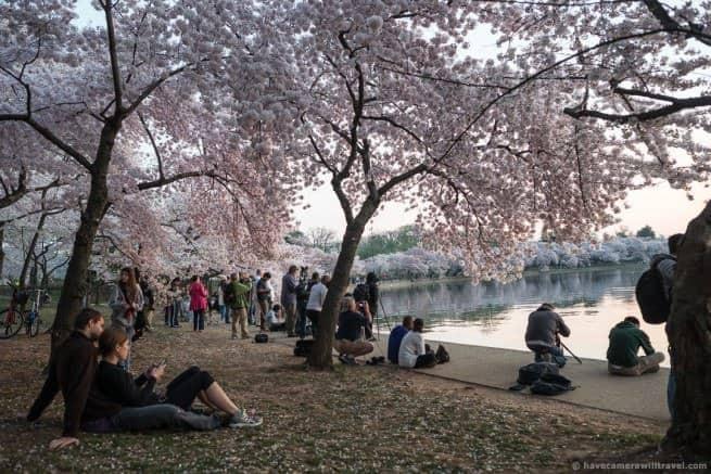 wpid4939-Washington-DC-Cherry-Blossoms-April-13-2014-04-COPYRIGHT.jpg