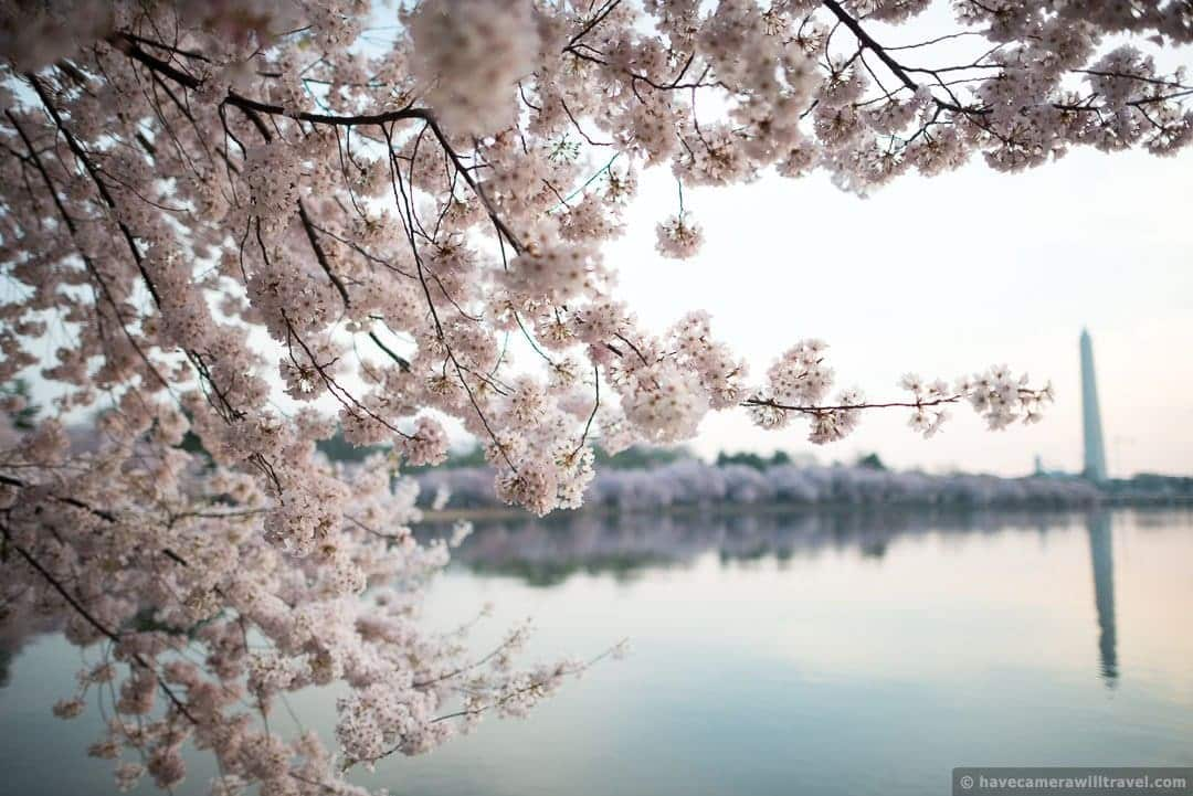 wpid4959-Washington-DC-Cherry-Blossoms-April-13-2014-13-COPYRIGHT.jpg