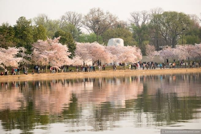 wpid4977-Washington-DC-Cherry-Blossoms-April-13-2014-22-COPYRIGHT.jpg