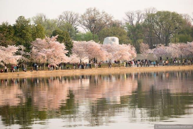 wpid4977-Washington-DC-Cherry-Blossoms-April-13-2014-22-COPYRIGHT.jpg