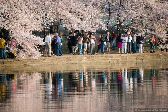 wpid4981-Washington-DC-Cherry-Blossoms-April-13-2014-24-COPYRIGHT.jpg