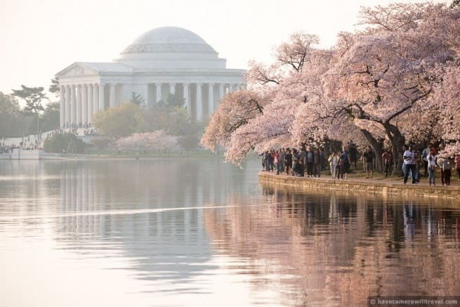 wpid4983-Washington-DC-Cherry-Blossoms-April-13-2014-25-COPYRIGHT.jpg