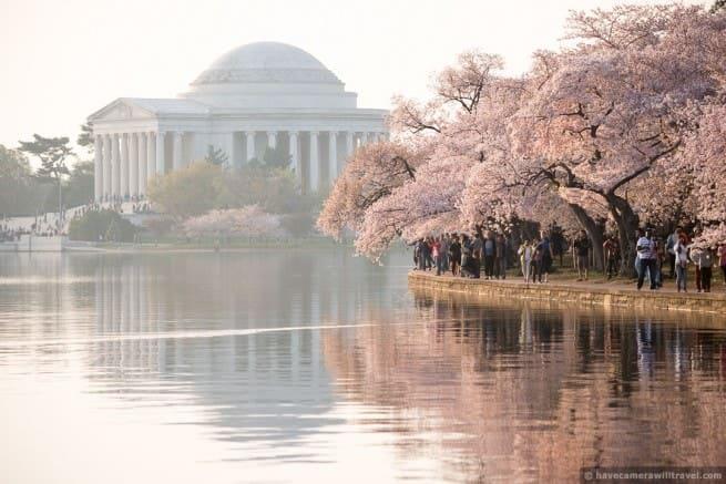 wpid4983-Washington-DC-Cherry-Blossoms-April-13-2014-25-COPYRIGHT.jpg