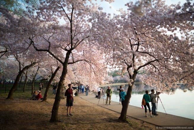 wpid4991-Washington-DC-Cherry-Blossoms-April-13-2014-29-COPYRIGHT.jpg