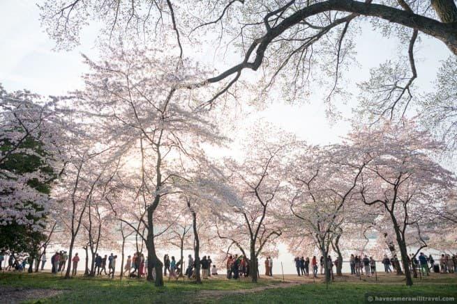 wpid4997-Washington-DC-Cherry-Blossoms-April-13-2014-32-COPYRIGHT.jpg