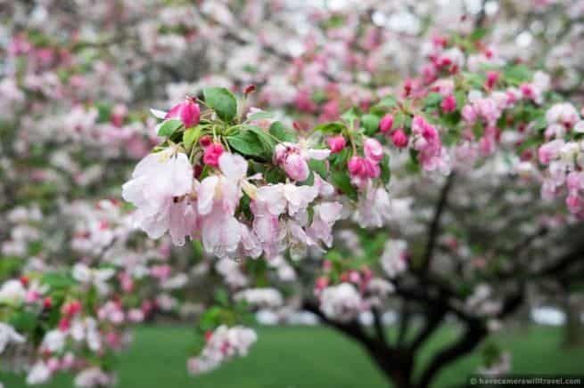 wpid5016-Washington-DC-Cherry-Blossoms-April-15-2014-01-COPYRIGHT.jpg