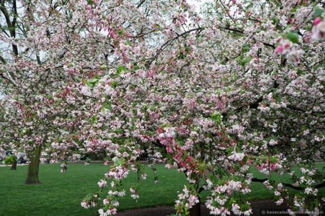 wpid5018-Washington-DC-Cherry-Blossoms-April-15-2014-02-COPYRIGHT.jpg