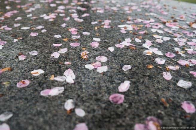 wpid5022-Washington-DC-Cherry-Blossoms-April-15-2014-03-COPYRIGHT.jpg