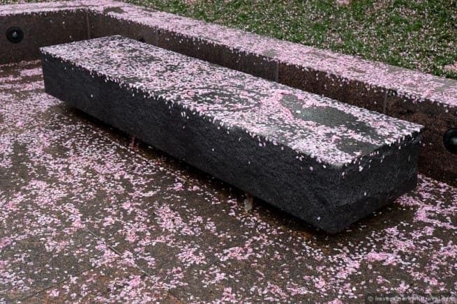 wpid5026-Washington-DC-Cherry-Blossoms-April-15-2014-05-COPYRIGHT.jpg