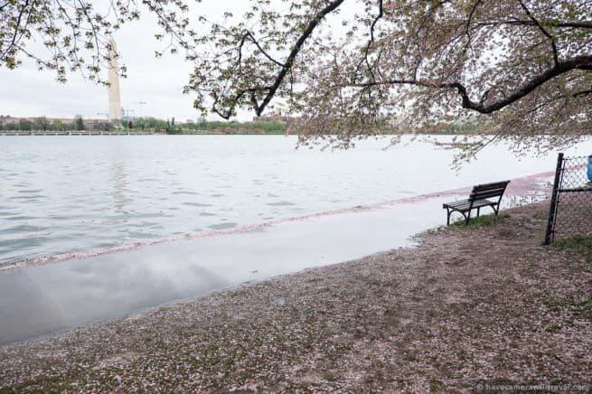 wpid5032-Washington-DC-Cherry-Blossoms-April-15-2014-08-COPYRIGHT.jpg