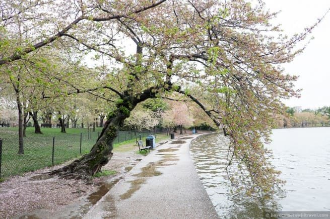 wpid5038-Washington-DC-Cherry-Blossoms-April-15-2014-11-COPYRIGHT.jpg
