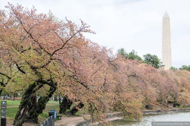wpid5054-Washington-DC-Cherry-Blossoms-April-15-2014-19-COPYRIGHT.jpg