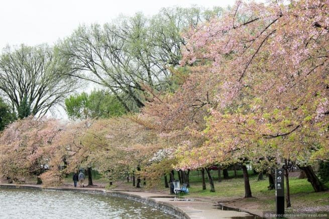 wpid5058-Washington-DC-Cherry-Blossoms-April-15-2014-21-COPYRIGHT.jpg
