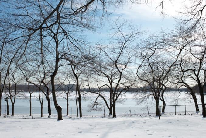 Cherry Blossom Watch Update: February 18, 2015