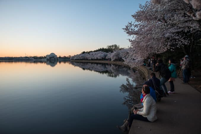 Cherry Blossoms - April 12, 2015