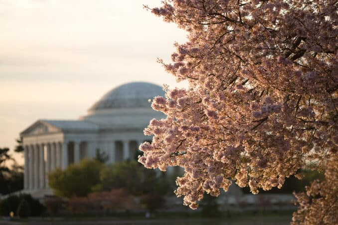 Cherry Blossoms April 16, 2015