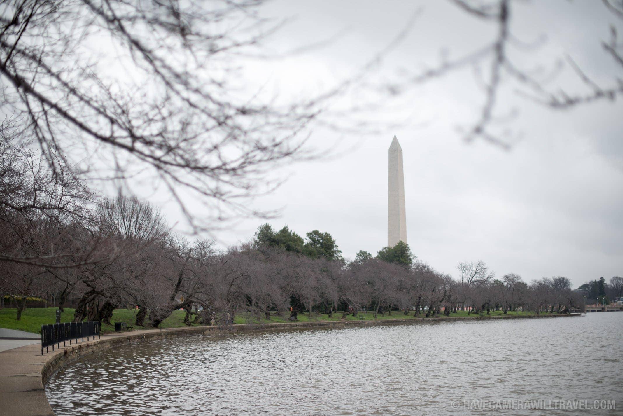 Washington DC Cherry Blossoms December 30, 2015
