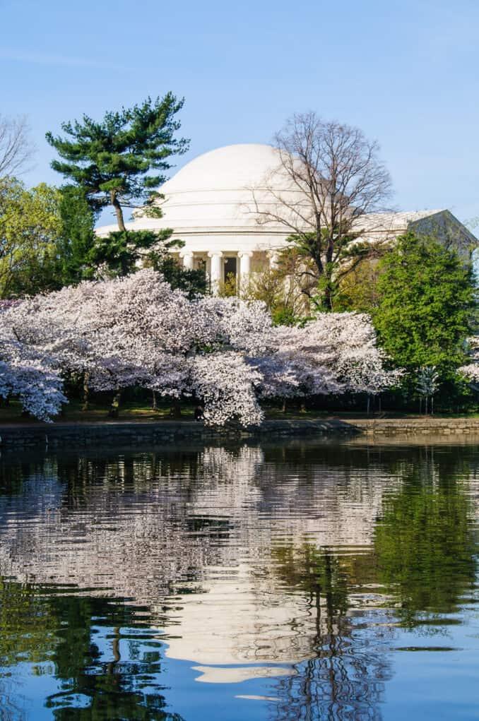 Washington Cherry Blossoms Jefferson Memorial Reflected on the Tidal Basin