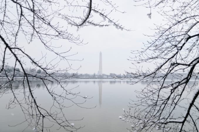 Washington Monument and Cherry Tree Branches in Winter